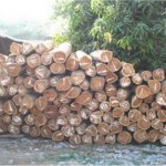 4. Wood Supply II